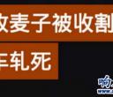 辟谣!某平台传响水陈家港某男子被收割机压死为不实信息!!